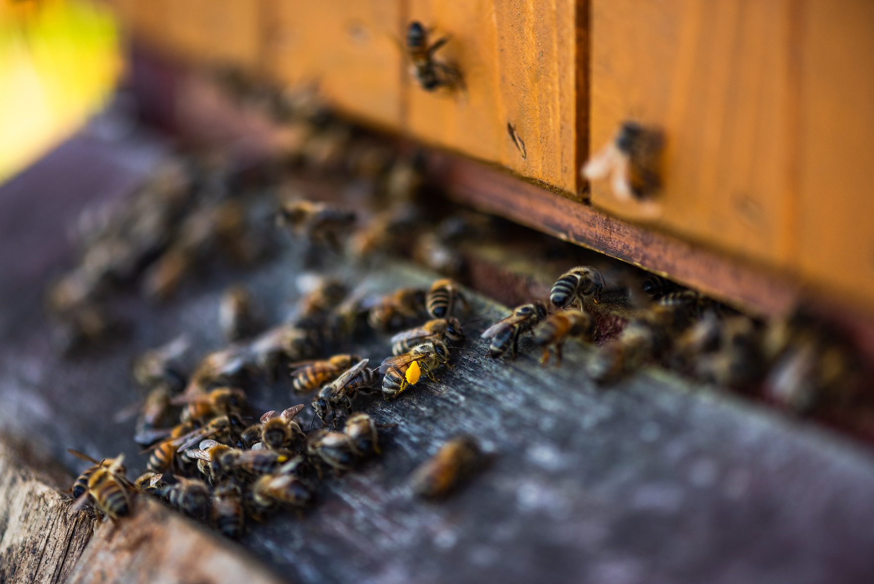 A hive of bees
