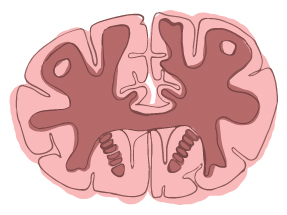 brain illustration 1