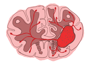 brain illustration 2
