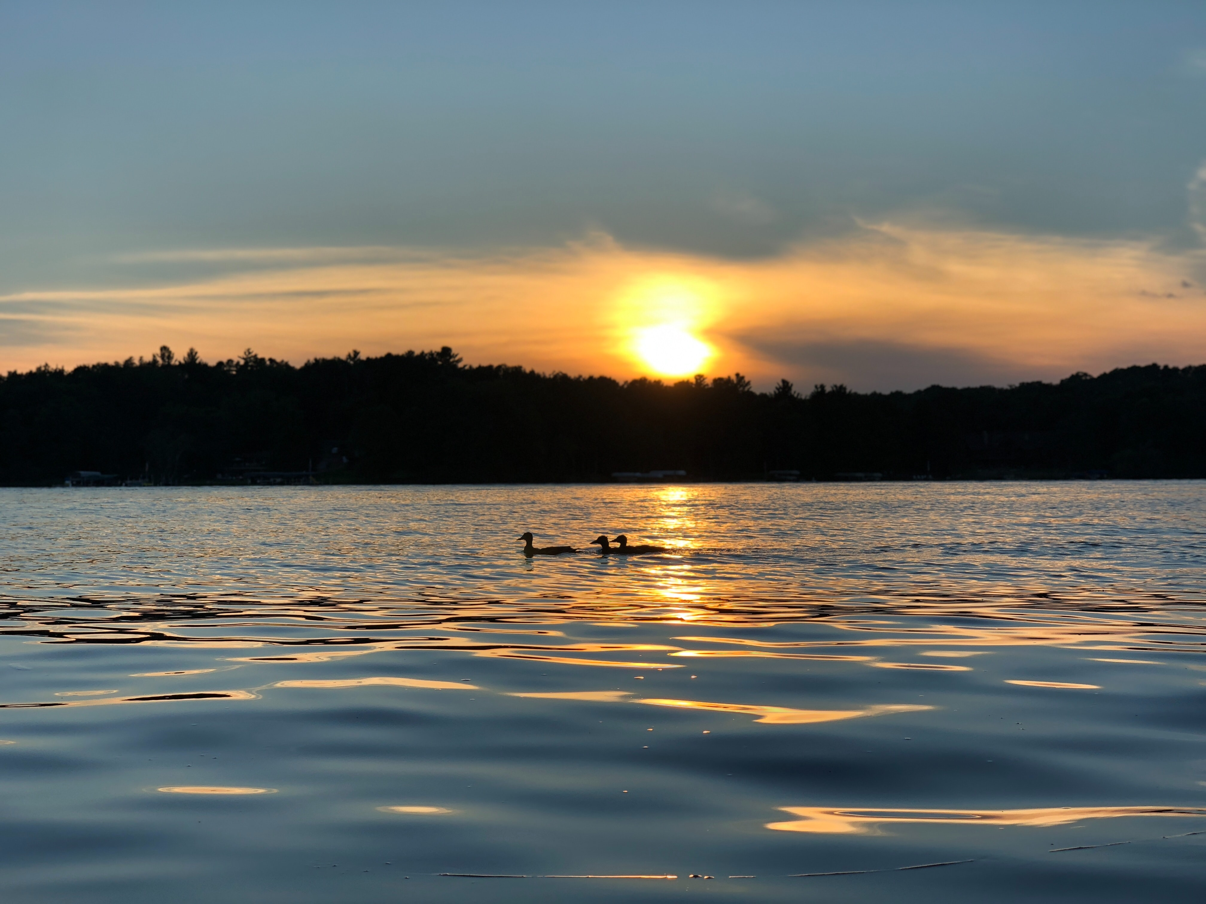 Two loons float along on a Minnesota lake at sunset