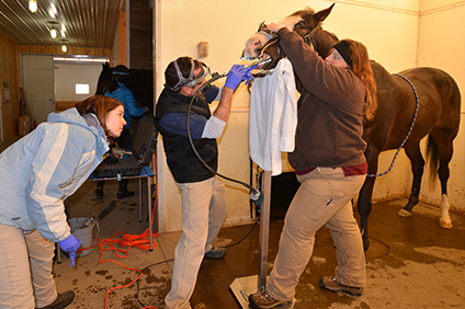Dental exam on a horse