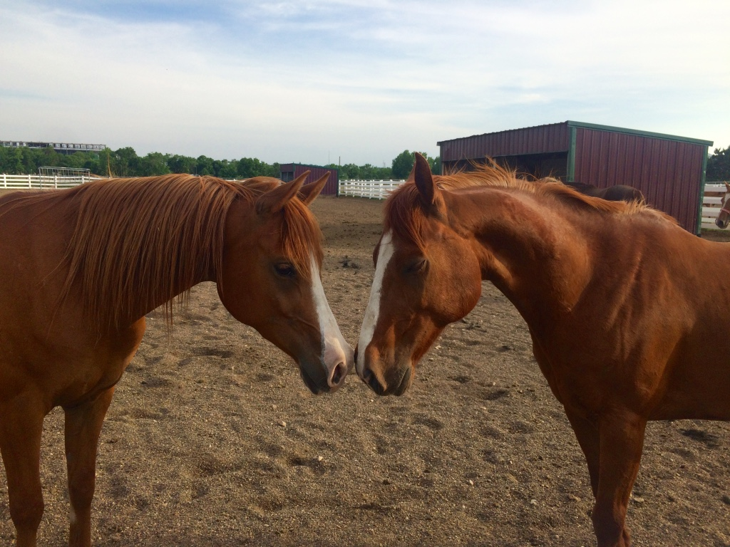 Two horses touch noses in a pen