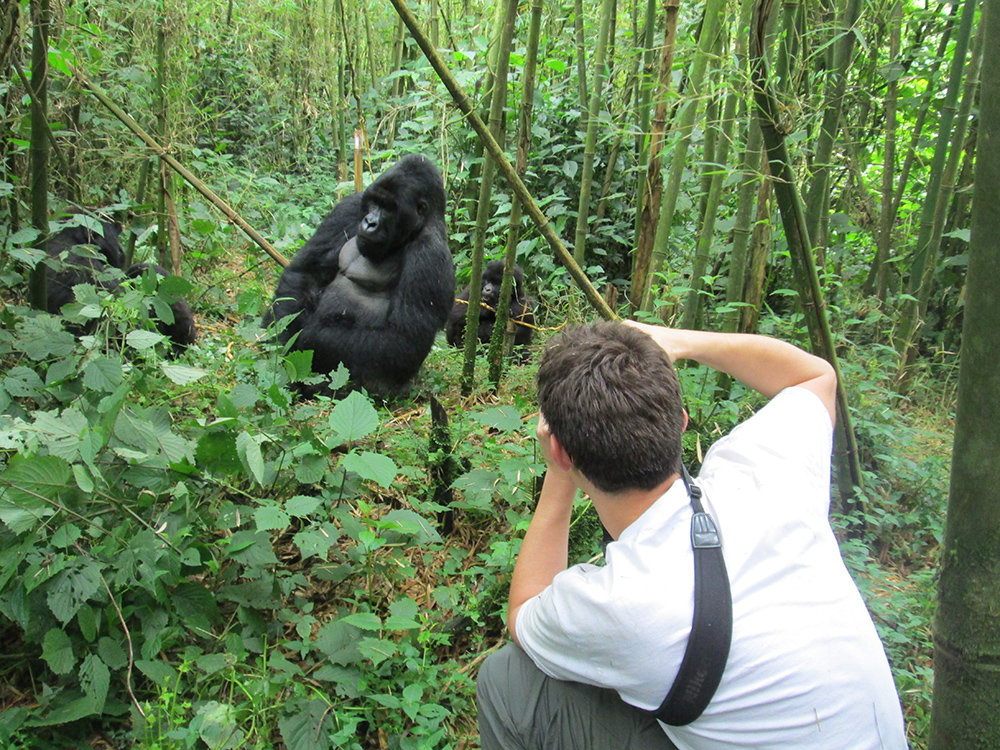 Jonathan Clayton photographing a gorilla in the forest