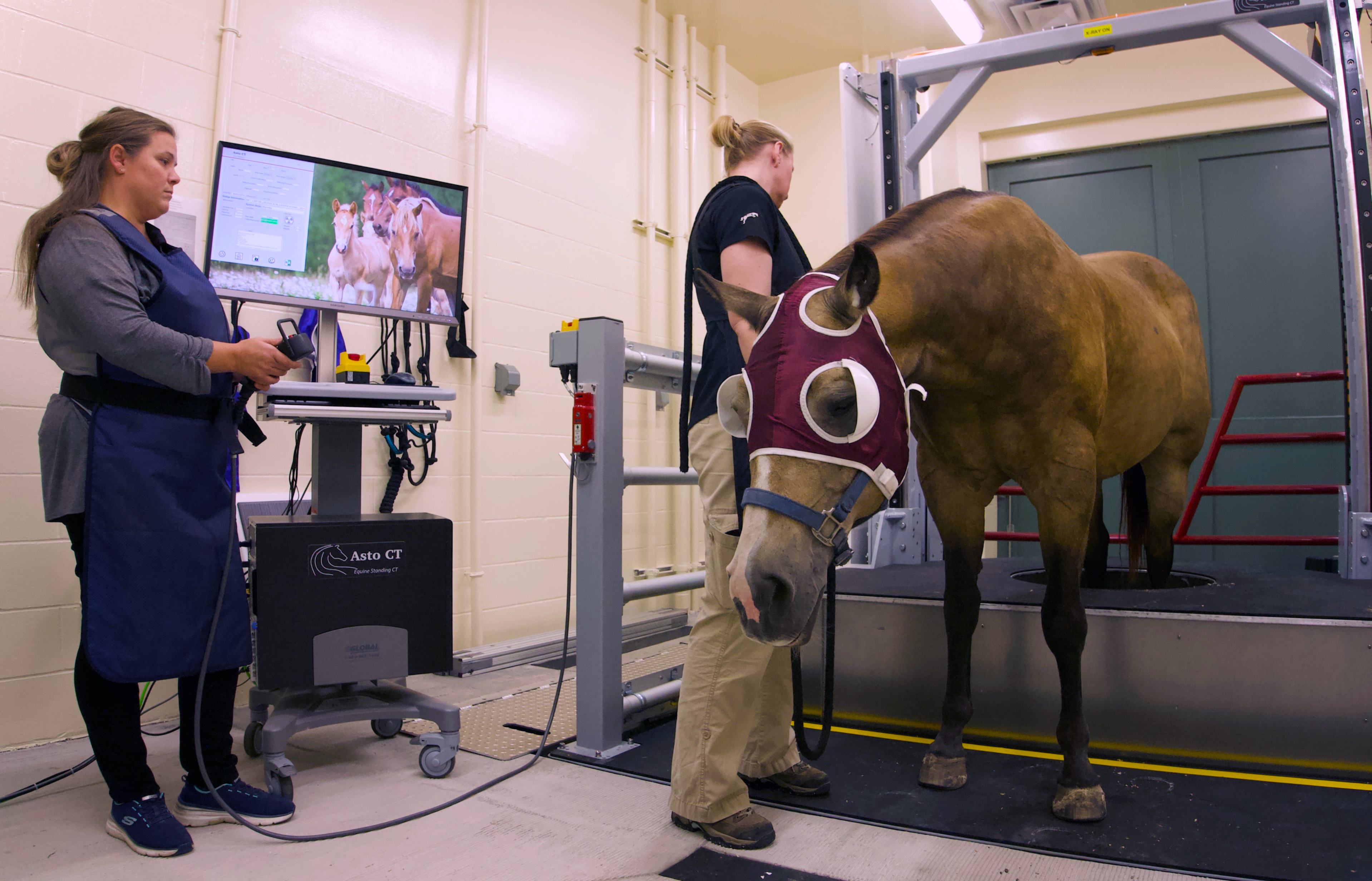 A brown horse has its rear legs scanned by the new standing CT at Leatherdale Equine Center. Two staff members help capture the image.