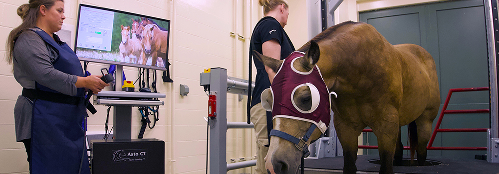 Standing CT scan at Leatherdale Equine Center