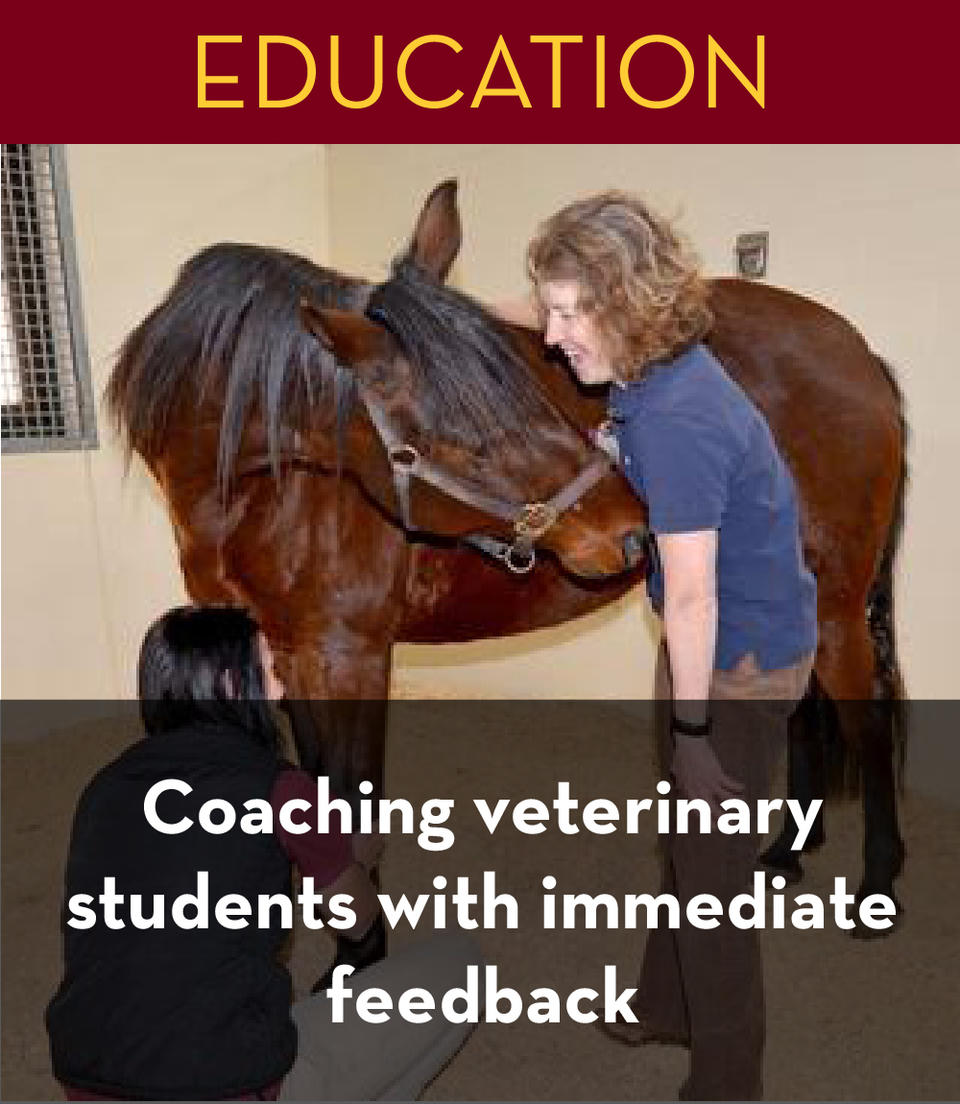coaching veterinary students with immediate feedback