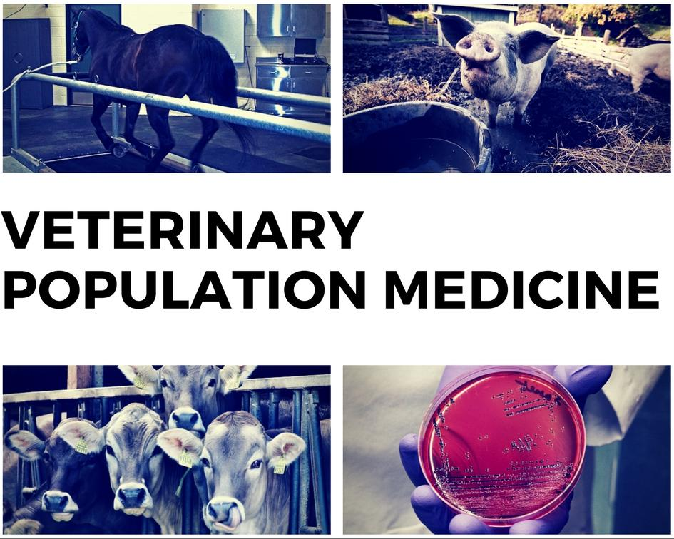 Link to Department of Veterinary Population Medicine