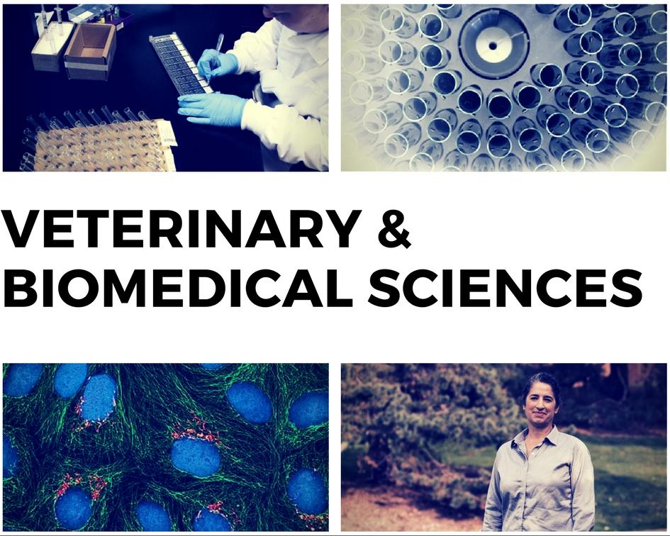Link to Veterinary Biomedical Sciences Department