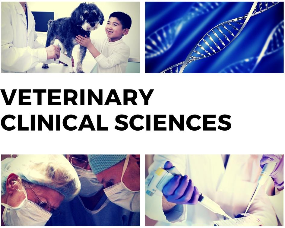 Link to Department of Veterinary Clinical Sciences webage