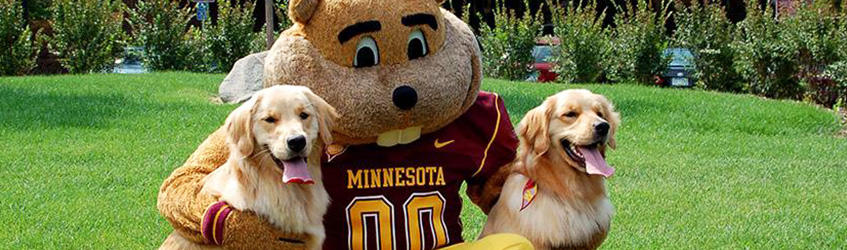 Goldy with goldens outside the VMC